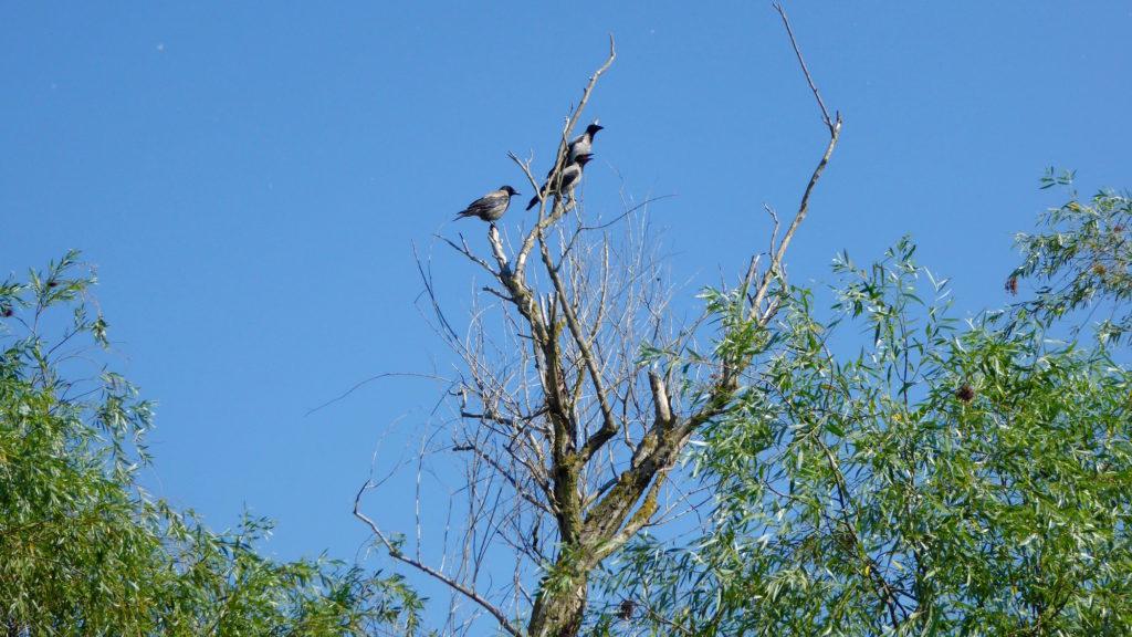 Vögel auf dem Baum 2. Wer kennt sie?