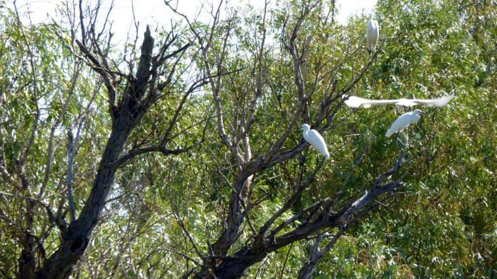 Vögel auf dem Baum 1. Wer kennt sie?