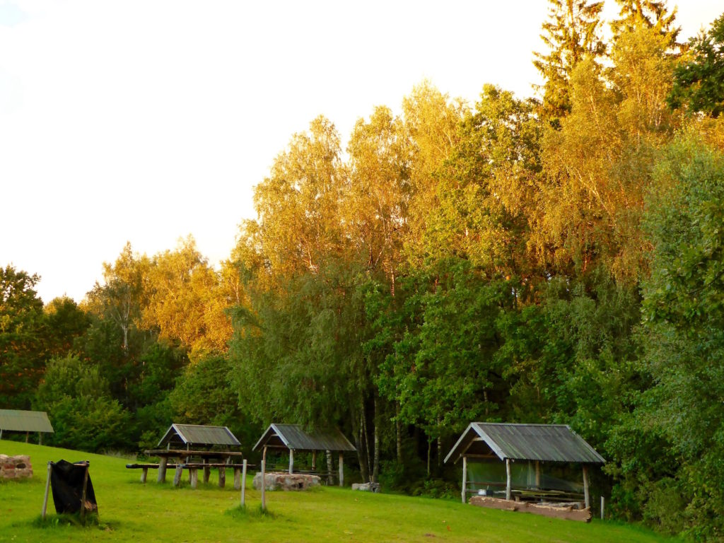 Bäume von der untegehenden Sonne angestrahlt