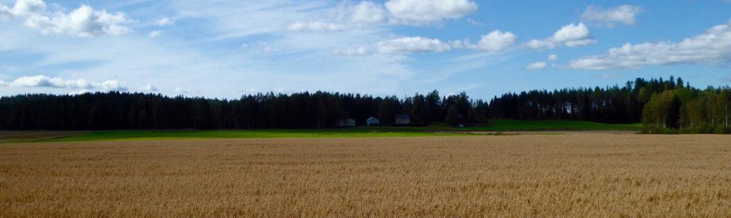Haferfeld mit Bauernhof