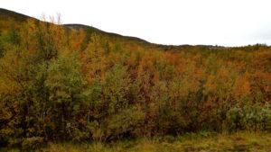 Herbst in Kvalsund