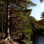 Stilleben mit Baum am Loch Farr