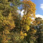 Herbstlaub in der Eifel