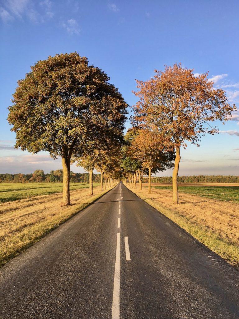 Herbstliche Strasse