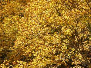 Herbst im Forêt de Navarre