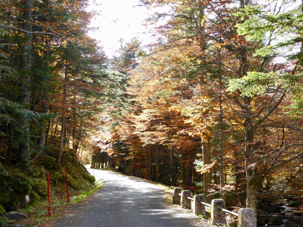 Herbst bei Counozouls