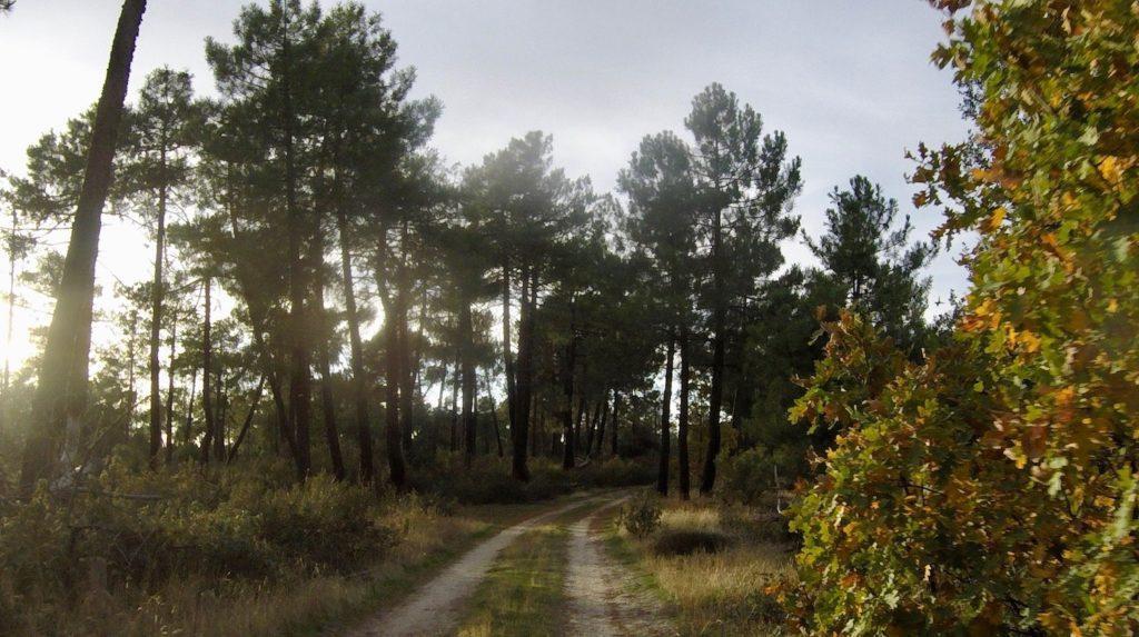 Waldweg bei Cantalejo, Kastilien-León, Spanien