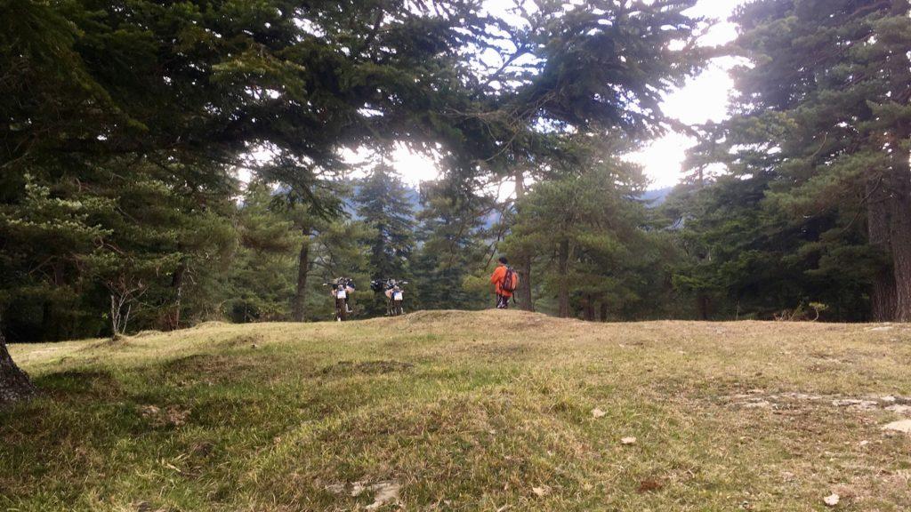 Beta Alp im Wald