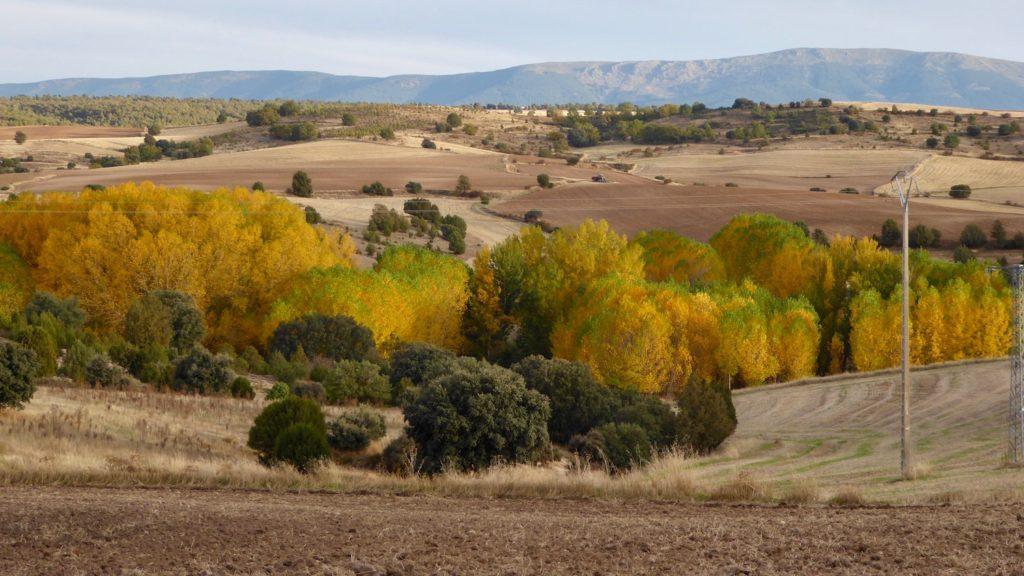 Herbst bei Rebollo, Kastilien-León, Spanien