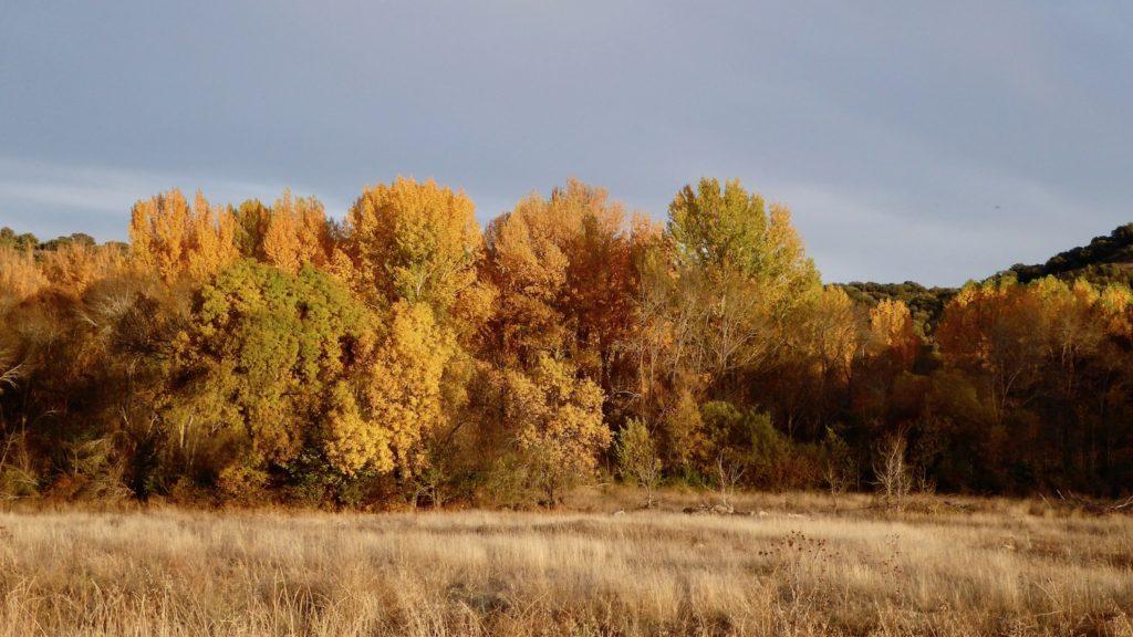 Herbst bei Herbst bei Rebollo, Kastilien-León, Spanien