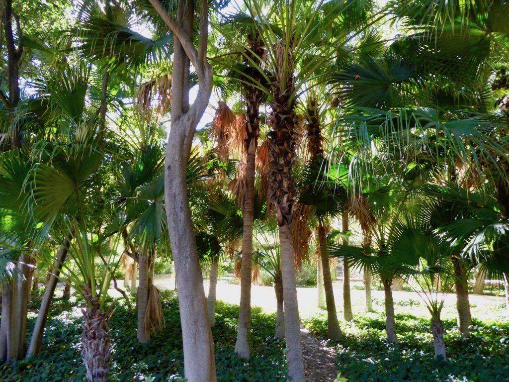 Palmen im Maria Luisa Park, Sevilla, Spanien