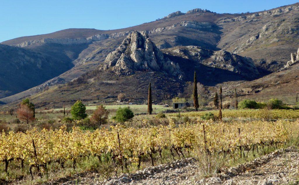 Weinberg bei Tuchan, Languedoc, Frankreich