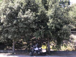 Mittagspause mit Motorrad im Schatten von Bäumen